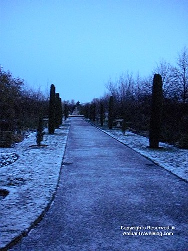 Rose Garden In Regents Park All Frozen