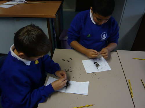Seedpill Workshop @ Thorpedene Junior School