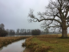 Petworth Park (Marc Sayce) Tags: winter february 2017 tree river lower pond petworth park west sussex national trust south downs sdnp