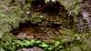 Rock landscape at Heritage Grove Redwood Preserve in La Honda, California (SCVHA) Tags: california commemorative lahonda heritagegrove redwoodpreserve