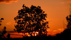 Red Planet (Plutone (NL)) Tags: sunset red orange tree zonsondergang boom rood silhouet oranje