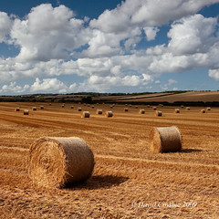 Bere Regis, Dorset - Hay Bales (David Crosbie) Tags: summer rural farming harvest dorset hay haybales omot fbdg milbornestandrew