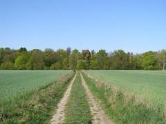Droga (magro_kr) Tags: road field landscape scenery view poland polska pole gdansk danzig droga widok gdask kaszuby pomorze krajobraz pomorskie sceneria