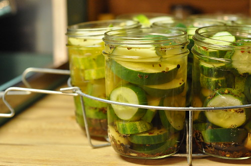 Garlic Dill Pickles - Food in Jars | Food in Jars
