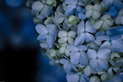 17415 : Petit bouquet