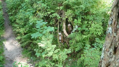 Die Murmeltiere