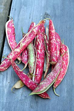 vertical beans