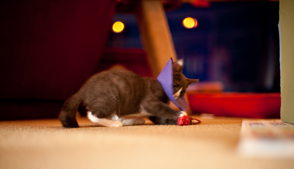 Crazy Cone Kitty