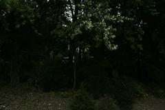 _MG_6529.JPG (zimbablade) Tags: trees sleepyhollow dougmiller videopoem