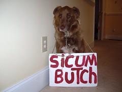 Sabo: Sic Um Butch