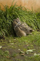CRW_5568 (lea.smith) Tags: flowers birds animals aiden sheep bears trace goats tigers lions owls sanfranciscozoo ohmy meerkats longday