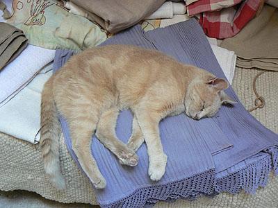 le chat dort.jpg