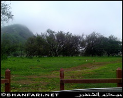 Wadi Darbat, Dhofar (Shanfari.net) Tags: flowers plants nature cow cows natural ericsson sony greenery cave oman salala zufar salalah sultanate dhofar  khareef     dufar  taqah     governate  dhufar  darbat taiq c905 dofar  raythut  thofar thufar