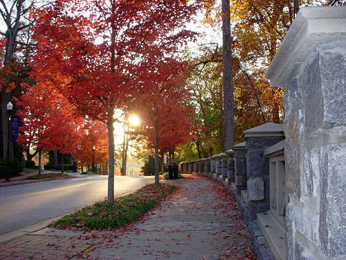 Autumn at Emory