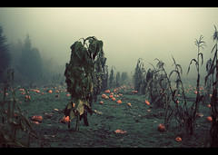 Party is over, it's time to die. (sparth) Tags: seattle morning party orange green halloween field fog pumpkin washington explore dying sammamish deadpumpkin explored 70200lf4 5dmarkii