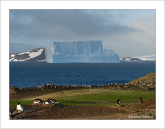 Barrientos Island (jeroenf) Tags: travel bird animal island penguin see gentoo antarctica iceberg pingun pygoscelispapua aitcho ijsberg ezelspingun canonpowershots5is barrientosisland