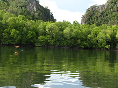 Eagle Feeding @ Mangrove Tour, Langkawi by pankaj.batra