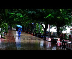 The Rain of Love (Pyngodan) Tags: kerala cochin kochi ernakulam thrissur keralam marinedrive img7126 pyngodan therainoflove
