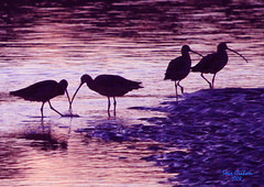 sunset birds (artfilmusic) Tags: water birds curlew longbilled
