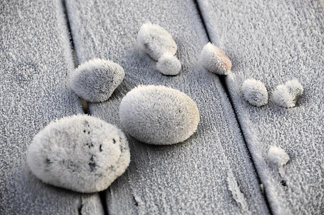 frostnupna stenar