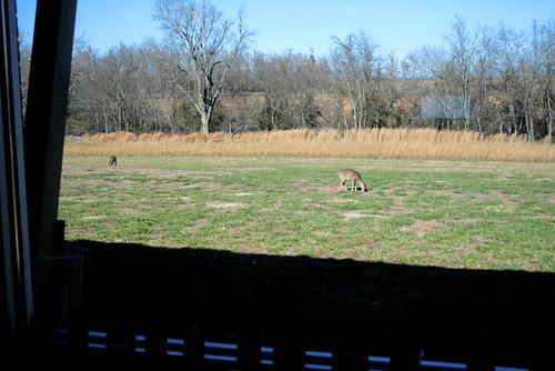 dec 3 deer