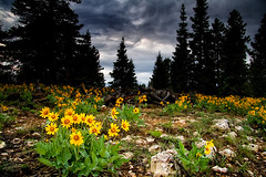 Spring on the Plateau (META-BEAST) Tags: park flowers camping trees sunset storm color nature beauty rain pine clouds forest landscape spring woods scenery hiking plateau meadow canyon evergreen national bryce elevation
