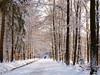 Let the sunshine in (dolorix) Tags: schnee winter sun snow forest sonne wald bej abigfave anawesomeshot diamondclassphotographer flickrdiamond sailsevenseas