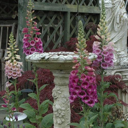 garden in may 003