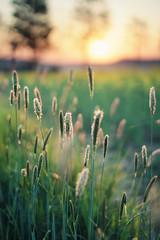 color explosion (Youronas) Tags: trees sun sunlight nature grass 30 sunrise canon germany deutschland spring colorful 14 natur sigma 7d fields franken sonnenaufgang raps frühling gegenlicht gräser againstthelight halms franconica