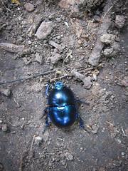 093.jpg (jetiahegyen) Tags: rovar túra túrázás kirándulás tour outdoor hiking visegrádihegység insect