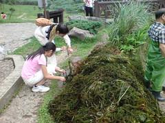 岸邊的遊客一起幫忙挑出小蝦