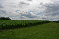 Agriculture (auburnxc) Tags: blue sky green clouds contest july auburn growth agriculture 2009 cluds auburnny auburnnewyork 13021 scavengerhuntofawesomeness