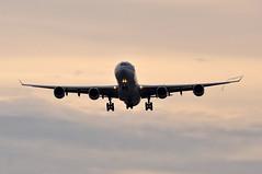 07:51 A340-642(HGW) MSN 0798 A7-AGD QR (A380spotter) Tags: london heathrow 600 airbus qr lhr a340 qatar qatarairways qtr egll  27r runway27r shortfinals a7agd dohlhr 600hgw qr0005 rasabuaboud