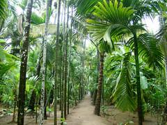 Greenary from Konkan / Life In Konkan (rahul_2800) Tags: life konkan in kokan diveagar sonyh50