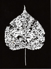 Paper cut leaf study (decaying) (andy singleton) Tags: blakandwhite leaves illustration paperart leaf stencil decaying kiragami decayingleaf leafstudy andysingleton paperpapercut leafillustration