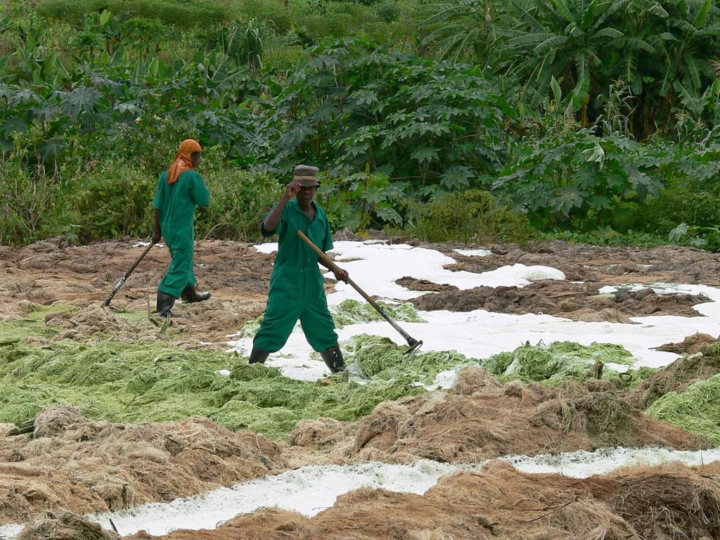 Sisal Waste Workers- Tanga, Tanzania, 2006