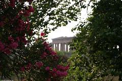 IT07 4385 Temple of Neptune, Paestum (Templar1307) Tags: travel flowers italy greek temple ancient ruins europe italia campania eu unescoworldheritagesite unesco temples classical column paestum apollo neptune salerno 2007 hera capaccio poseidonia templeofhera templeofneptune пестум