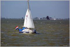 Little Sailboat (evoergo) Tags: water boot boat ijsselmeer almere uitdam oostvaardersdijk