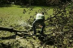 _MG_6490.JPG (zimbablade) Tags: trees sleepyhollow dougmiller videopoem