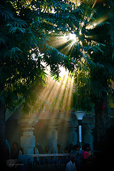 .Eternal.Blessings. (.krish.Tipirneni.) Tags: trees light sunset people india tree green nature beautiful blessings temple hope evening nikon bright magic blessing ap rays delightful eternal andhrapradesh srisailam swamy raysofhope 18200vr d80 rktnature lightfromsky ashokatree srimallikarjunaswamytemple