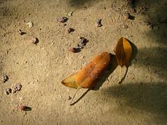Autumn in Seville (Koldo2ka) Tags: hojas canong5 otoño otoo portilplaya