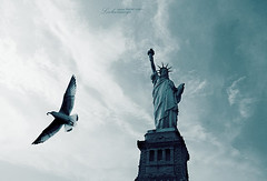 Freedom is nothing but a chance to be better. (ShanLuPhoto) Tags: nyc trip travel blue sky usa newyork bird america island unitedstates seagull statueofliberty   loolooimage