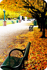 Autumn Walkway (Doug Wallick) Tags: autumn trees urban colors leaves bench colorful minneapolis center explore sidewalk walkway convention picnik flickraward