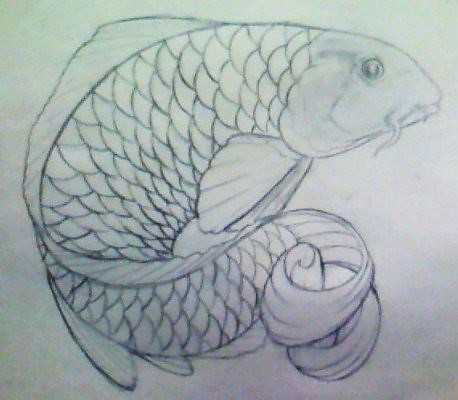 koi fish drawing Drawing of a