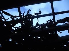 Seaweed from below (omaniblog) Tags: photoshoot garry seasidetown kensale