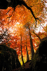 (Christoph Zurbuchen) Tags: travel autumn light sunset shadow red sky orange sun sunlight mist mountain black alps color tree art nature beautiful beauty silhouette stone forest sunrise landscape outdoors golden switzerland nikon peace swiss background horizon country award scene panoramic land environment kandersteg serene majestic range platinum tranquil berner scenics oberland blausee d90 supershot platinumpeaceaward flickrunitedaward
