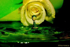 psychedelic drop (irina_rosca) Tags: black macro green water rose yellow closeup drop romania refraction