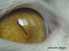 Olho do gato - Cat eye (alelignos) Tags: macro reflection eye cat creative gato reflexo creativo
