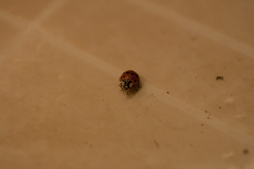 Ladybug Ready for Flight