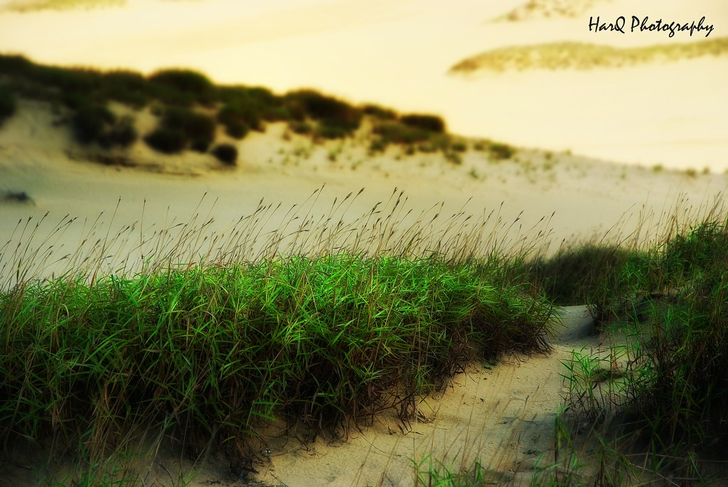 Green on Sand